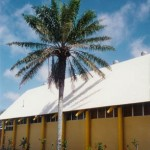 31. Museum Side_Palm